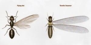 Ant Swarmer versus Termite Swarmer