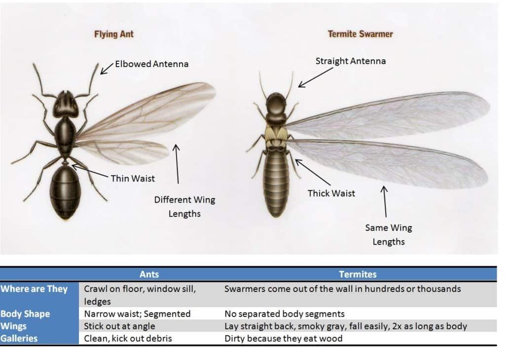 Termites Reliable Exterminators